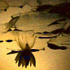 polaris_etoile userpic