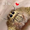 JV: bib
