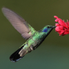 Never At Home: hummingbird