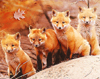 dragondie: Foxes