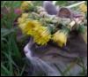 mnaa userpic