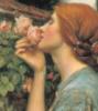 Faziosmistress: Sweet rose