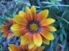 sajaxom userpic