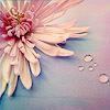 flower [stock]