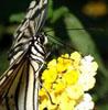wingedillusions userpic