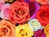 irish_rosie userpic