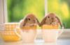 cup, Bunnies