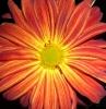 sammyjain userpic