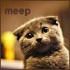 kitten - meep