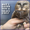 offer you a small owl