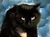 cynicalcat userpic
