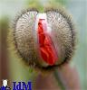 vaginal flower