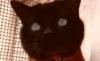 gatito, guapito