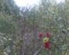 eachseed userpic