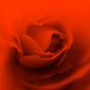 rozul userpic