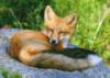 wildlife_den userpic