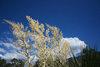 alan - joshua tree bloom