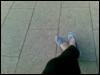 elaineys userpic