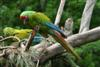 a_green_macaw userpic