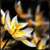 Loopily: Botany