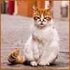 Фотографии уличных кошек