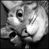 Коты Люся 30-05-08