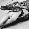 assigator
