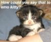 jya_bd_cp_ttgb: Emo kitten