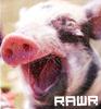 Animals - kiwi rarw