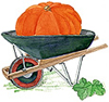 Des: Pumpkin in wheelbarrow