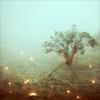 Stock- Mist