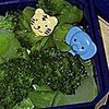 broccoli jungle