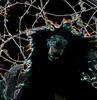 the_blackwolf userpic