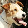 Terriers - Kismet Grin