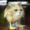 chinchilla_toes userpic