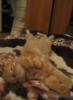 Леся Т.(Чендэ): Кот