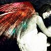 ari wings