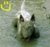 anechka_1 userpic