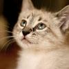 Kitten Sugar