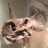 lynsaurus