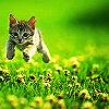 Egwene: cat - jump