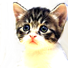 Egwene: cat - cute eyes
