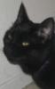 meowcat232 userpic