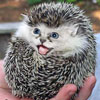 gothhog userpic