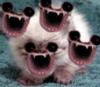 mouths