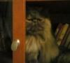 Кот Ученый в шкафу