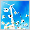 infiniteblue17: daisies and windmill