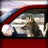Your Obedient Serpent: coyote drives