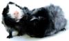 skcavies userpic