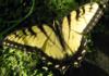 tabby: butterfly